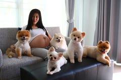 Femme enceinte et animaux familiers mignons de chien pomeranian dans le salon Image stock