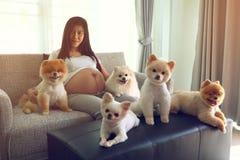 Femme enceinte et animaux familiers mignons de chien pomeranian dans le salon Image libre de droits