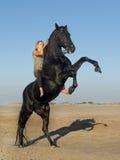 Femme et étalon de cheval Photographie stock libre de droits