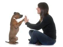 Femme et bull-terrier du Staffordshire Image stock