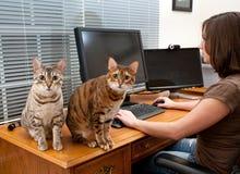 Femme et chats au bureau d'ordinateur Photo libre de droits