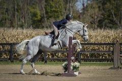 Femme et cheval gris au-dessus des barrières Image stock