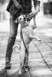 Femme et chien Photo libre de droits