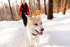 Femme et chien marchant en montagnes d'hiver Images stock