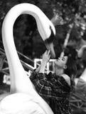 Femme et cygne sur le fond ensoleillé vert de parc photographie stock libre de droits