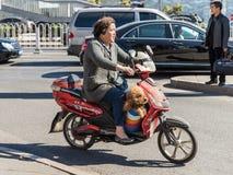 Femme et son chien sur un scooter Image stock