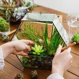 Femme faisant le florarium Concept de jardinage à la maison de passe-temps photos stock