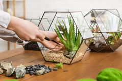 Femme faisant le mini jardin Concept de jardinage à la maison de passe-temps images libres de droits