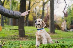 Femme formant son chien en parc photo libre de droits