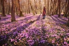 Femme heureuse appréciant les fleurs de nature et de crocus de ressort photographie stock