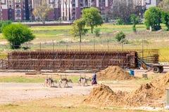 Femme indienne marchant par le secteur de construction avec des ânes photo libre de droits