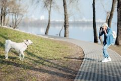 Femme inspirée prenant des photos d'un chien Image stock