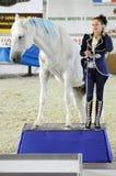 Femme jockey de femme dans un costume bleu-foncé près à un cheval Exposition internationale de cheval Photos stock