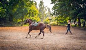 Femme jockey et cheval de course de jeune fille Photo libre de droits