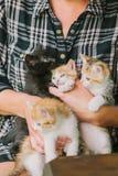 Femme jouant avec des chatons Chat Image stock