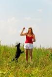 Femme jouant avec son crabot dans un pré Photo libre de droits