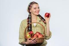 Femme mangeant Apple organique dans le verger fruit d'?t? de r?colte de ressort verger, fille de jardinier avec le panier de pomm image stock