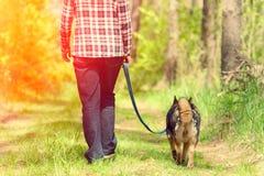 Femme marchant avec le chien dans la forêt Image stock