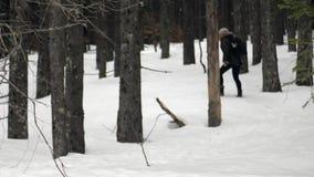 Femme marchant dans la forêt avec la neige banque de vidéos