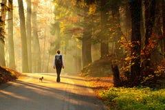 Femme marchant dans la forêt d'automne Image libre de droits