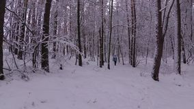 Femme marchant par les congères dans la forêt d'hiver clips vidéos