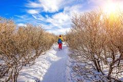 Femme marchant sur la traînée avec la neige en montagnes photo libre de droits