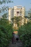Femme marchant un crabot Images libres de droits