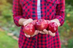 Femme moissonnant des pommes Images libres de droits
