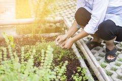 Femme moissonnant les usines de fines herbes dans le jardin d'herbes aromatiques Photo libre de droits