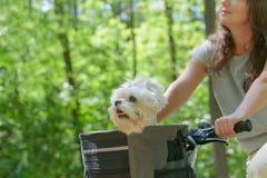 Femme montant un vélo avec son chien images stock