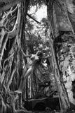 Femme nue en nature. Image stock