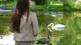 Femme observant le lac avec le cygne banque de vidéos