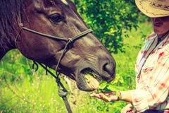 Femme occidentale prenant soin de cheval sur le pré Images libres de droits