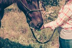 Femme occidentale prenant soin de cheval sur le pré Photos stock