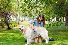 Femme peignant le chien de golden retriever de fourrure sur une pelouse verte Photos libres de droits