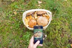 Femme photographiant des champignons par le smartphone photo stock