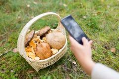 Femme photographiant des champignons par le smartphone photos libres de droits