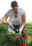 Femme plantant des fleurs Image libre de droits