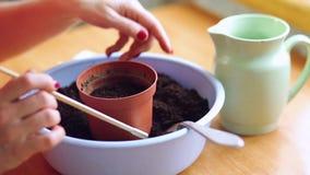 Femme plantant des graines dans un pot banque de vidéos
