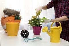 Femme plantant la plante d'intérieur dans le pot à la maison photos libres de droits