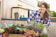 Femme plantant le récipient sur le jardin de dessus de toit Image stock