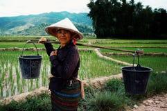 Femme plantant le riz dans les paddys au secteur de village rural au milieu des terres cultivables photographie stock