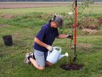 Femme plantant un arbre Images stock