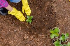 Femme préparant le sol pour la plantation photographie stock libre de droits