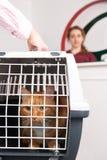 Femme prenant Cat To Vet In Carrier Image libre de droits