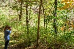 Femme prenant des photos des arbres colorés de chute dans la forêt photographie stock