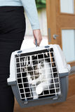 Femme prenant l'animal familier Cat To Vet In Carrier Images stock