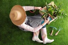 Femme prenant soin d'usine sur l'herbe verte Autoguidez le jardinage photo stock
