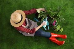 Femme prenant soin d'usine sur le jardinage de maison d'herbe verte photo libre de droits