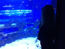Femme regardant l'aquarium Photos libres de droits